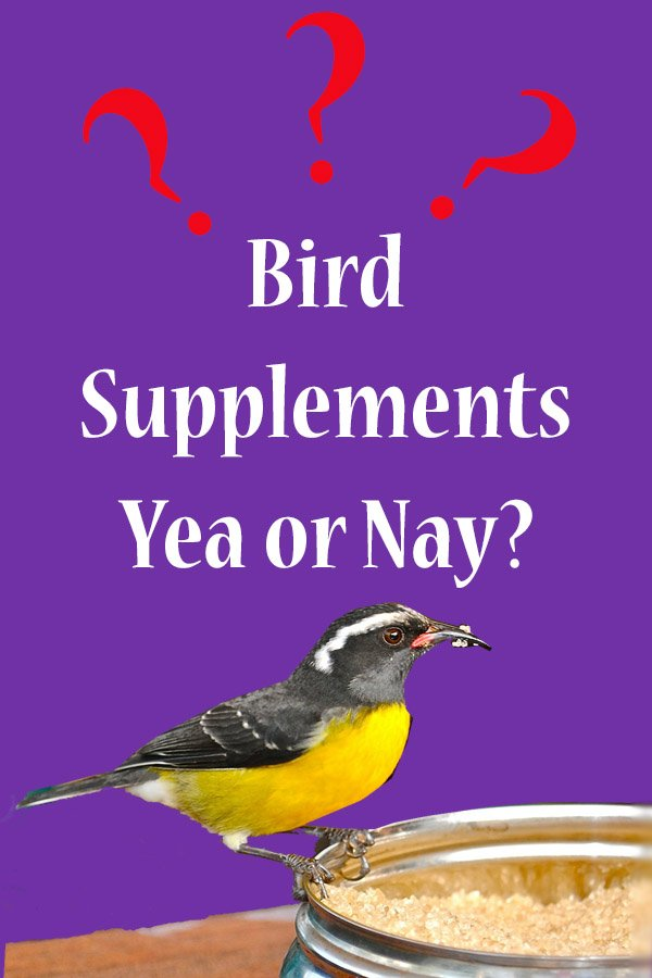 Supplements for birds yes or no