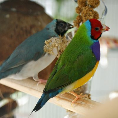 In Our Aviary