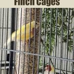 Recomnended Cages for finches