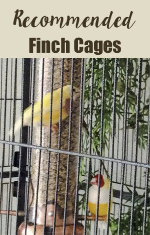 Cages for Gouldian Finches