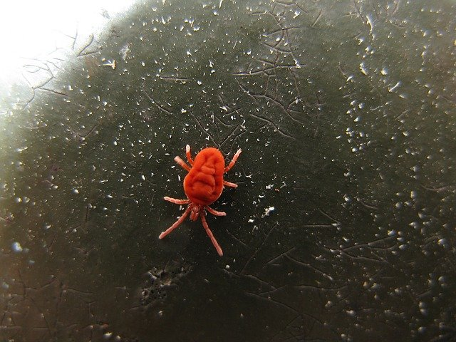 close up photo of a mite