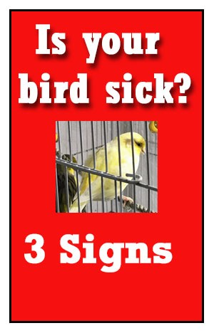 Supplements for Sick Finches and Canaries